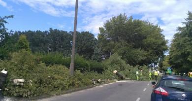 NT Zbaszyńska 11.08.2016r  (1)