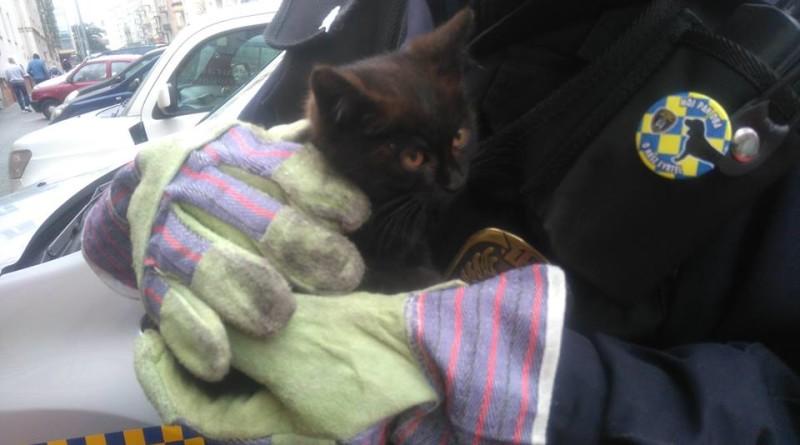 funkcjonariuszka-eko-patrolu-wraz-z-uratowanym-kotem,pic1,1016,99010,151487,show2