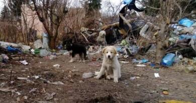 niehumanitarne-traktowanie-psow,pic1,1002,103689,162185,with-ratio,16_9