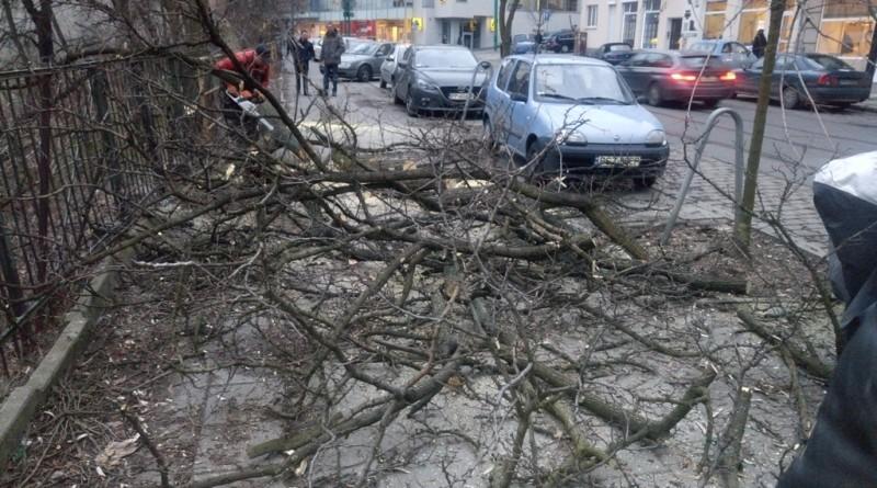 ul-gorna-wilda-efekt-bezmyslnej-wycinki-drzew,pic1,1002,103390,161537,show2