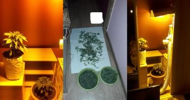 Marihuana Gniezno Trzemeszno Policja
