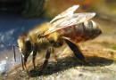 Innowacyjna technologia rusza na pomoc pszczołom!