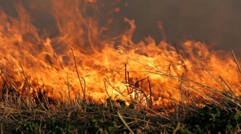 Wypalanie-traw