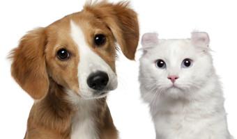 Co kryje się w karmie dla zwierząt ?